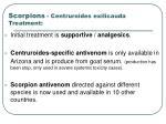scorpions centruroides exilicauda treatment