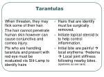 tarantulas33