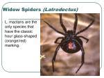 widow spiders latrodectus25