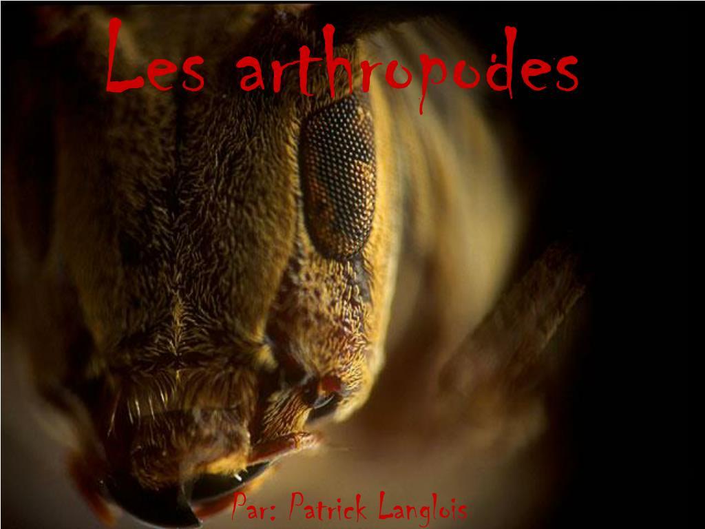 les arthropodes l.