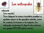 les arthropodes2