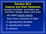 section 28 4 insects and their relatives92