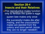 section 28 4 insects and their relatives94