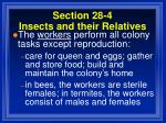 section 28 4 insects and their relatives95