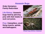 assassin bugs