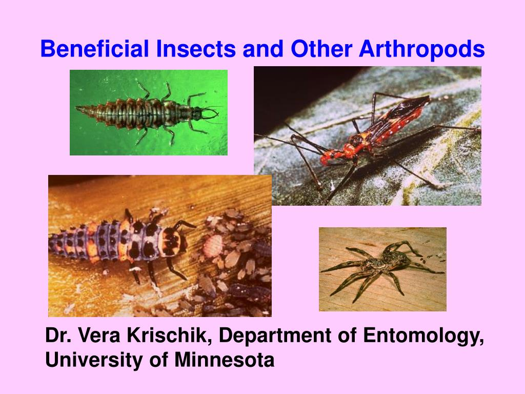 beneficial insects and other arthropods l.