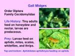 gall midges