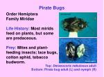 pirate bugs