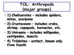 tol arthropods major groups