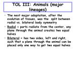 tol iii animals major lineages30