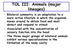 tol iii animals major lineages33