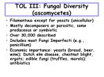 tol iii fungal diversity ascomycetes