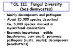 tol iii fungal diversity basidiomycetes