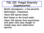 tol iii fungal diversity zygomycetes