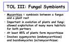 tol iii fungal symbionts19