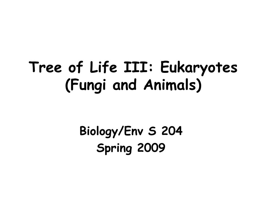 tree of life iii eukaryotes fungi and animals l.