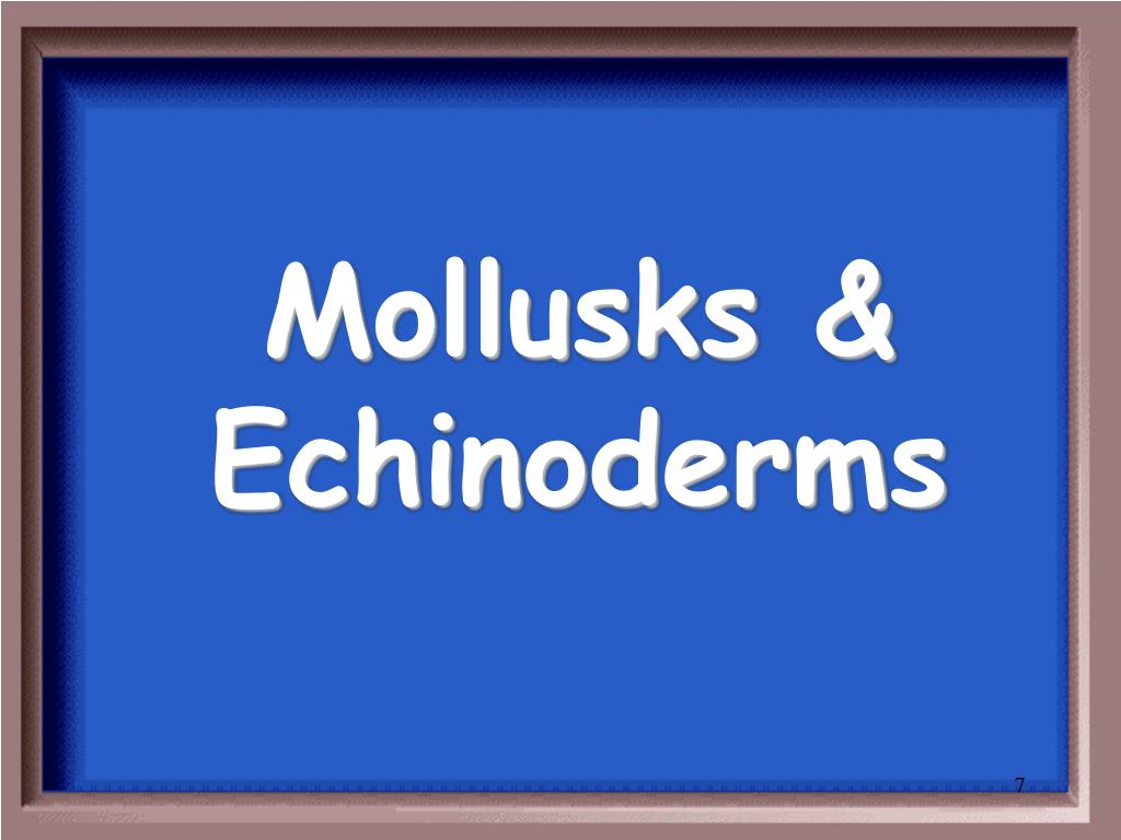 Mollusks & Echinoderms