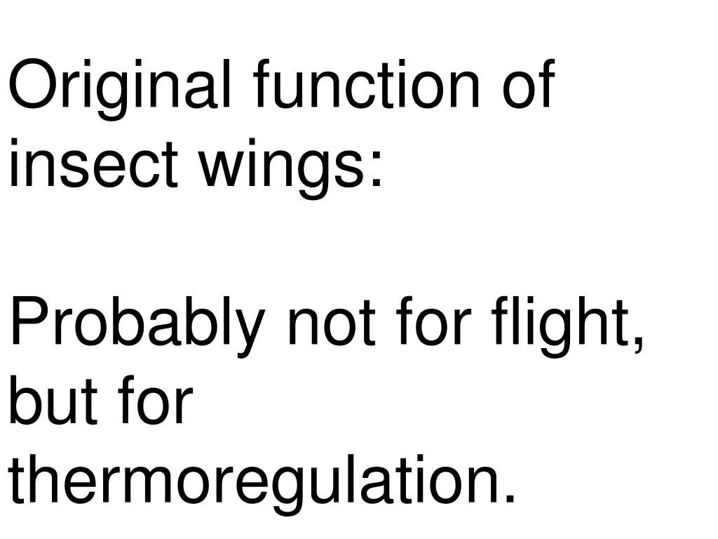 Original function of insect wings: