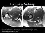hamstring anatomy14