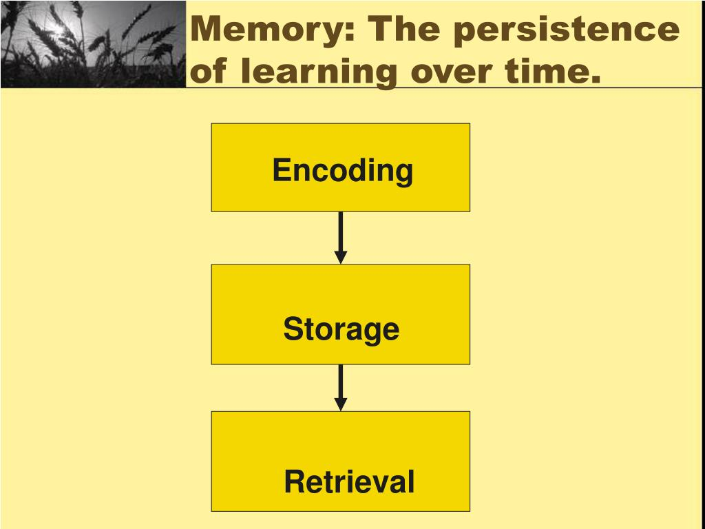 Memory: The persistence of learning over time.