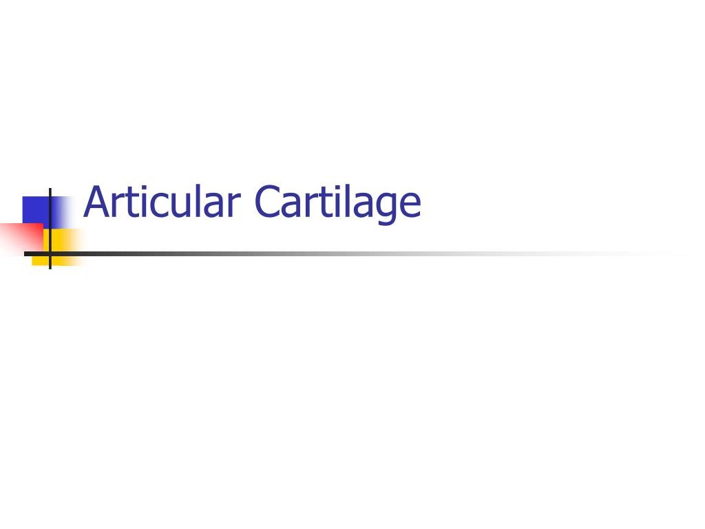 articular cartilage l.