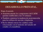 desarrollo prenatal17