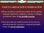 vascularizaci n e inervaci n