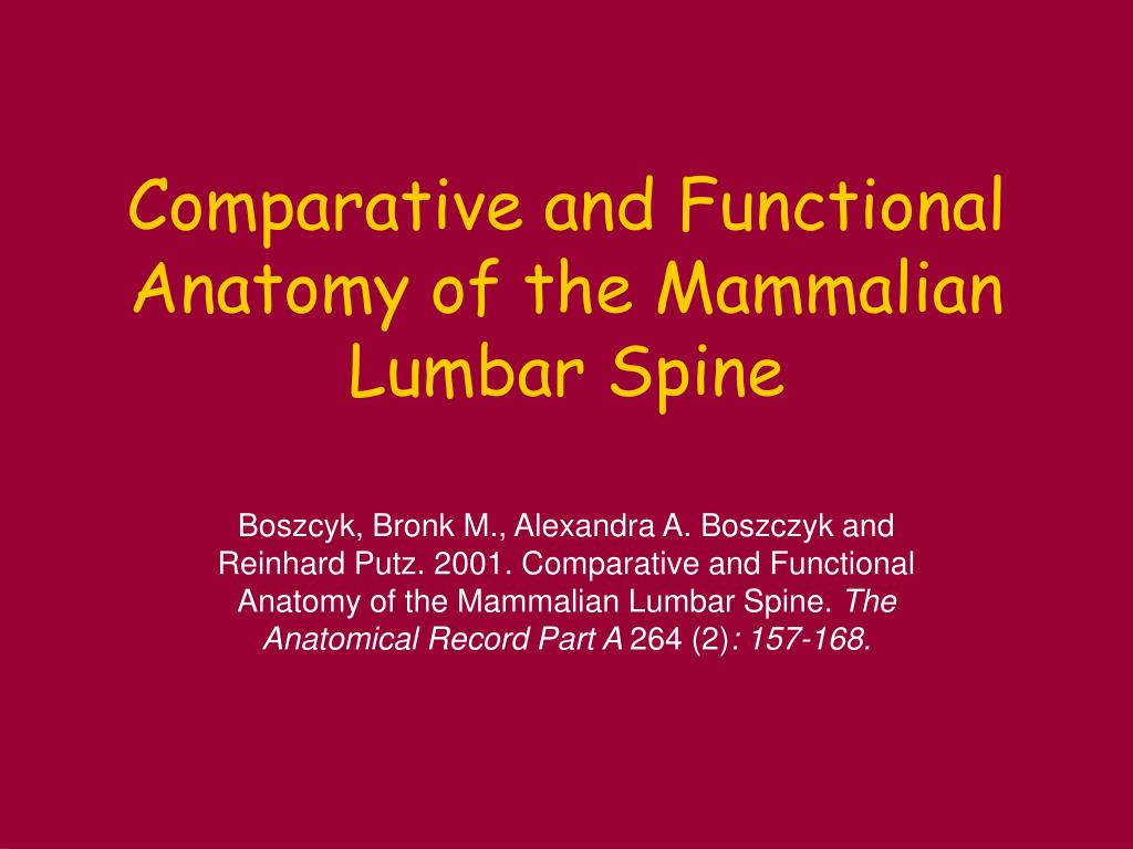 comparative and functional anatomy of the mammalian lumbar spine l.