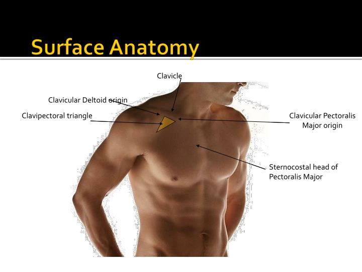 Ppt Shoulder Joint Glenohumeral Joint Powerpoint Presentation