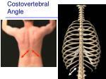 costovertebral angle