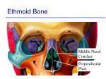 ethmoid bone51