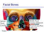 facial bones68