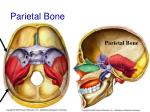 parietal bone39