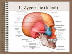 1 zygomatic lateral