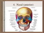 4 nasal anterior
