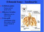 ethmoid bone landmarks