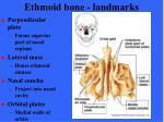 ethmoid bone landmarks37