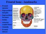 frontal bone landmarks