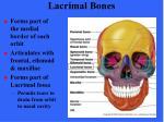lacrimal bones