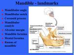 mandible landmarks