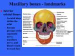 maxillary bones landmarks44