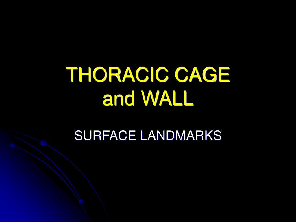 thoracic cage and wall l.