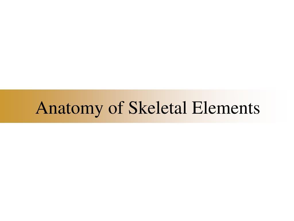 anatomy of skeletal elements l.