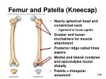 femur and patella kneecap