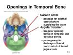 openings in temporal bone