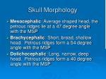 skull morphology