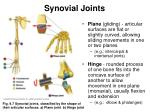 synovial joints15
