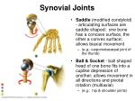 synovial joints17