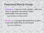 functional muscle groups19