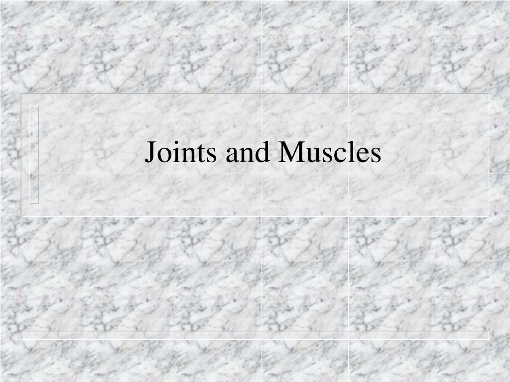 joints and muscles l.